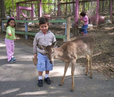 Matthew Meets Deer